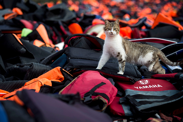 猫「Greek Island Of Lesbos On The Frontline Of the Migrant Crisis」:写真・画像(11)[壁紙.com]