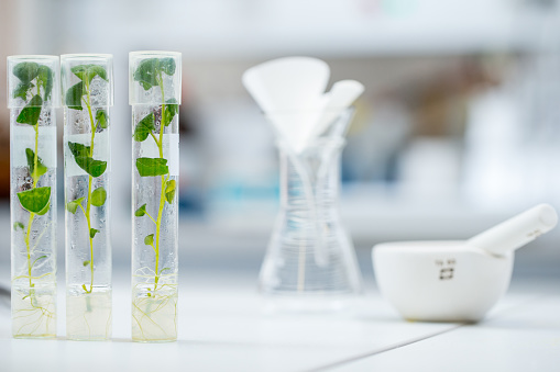 Mortar and Pestle「Plant Tissue Culture in Test Tubes」:スマホ壁紙(2)