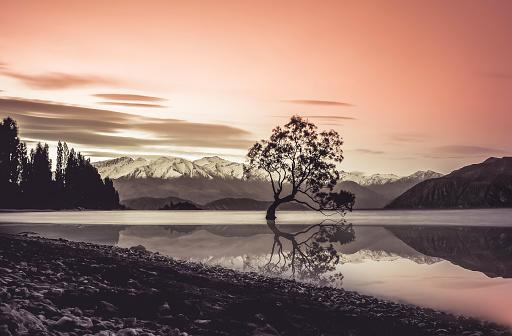 New Zealand「The famous willow tree in Wanaka」:スマホ壁紙(12)