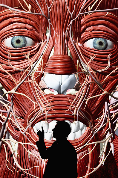 Partnership - Teamwork「3D Definitive Human Project Launches For The Edinburgh Royal College Of Surgeons」:写真・画像(15)[壁紙.com]