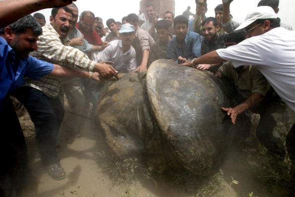 Saddam Hussein「Iraqis Destroy Saddam Statue」:写真・画像(19)[壁紙.com]