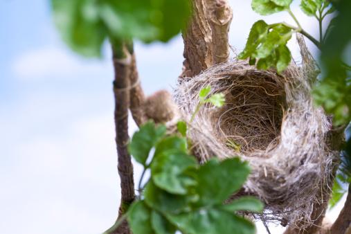 鳥の巣「鳥の巣」:スマホ壁紙(0)