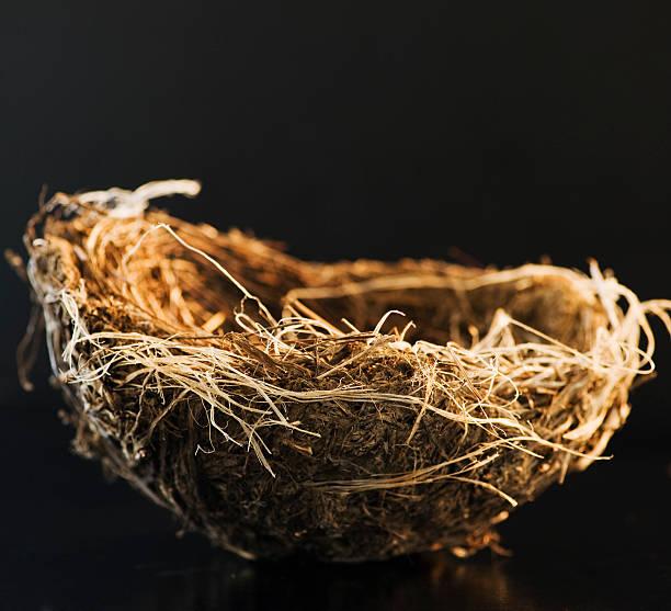 Bird's nest:スマホ壁紙(壁紙.com)