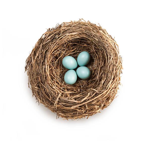 Bird's nest with four blue eggs:スマホ壁紙(壁紙.com)