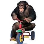 猿壁紙の画像(壁紙.com)