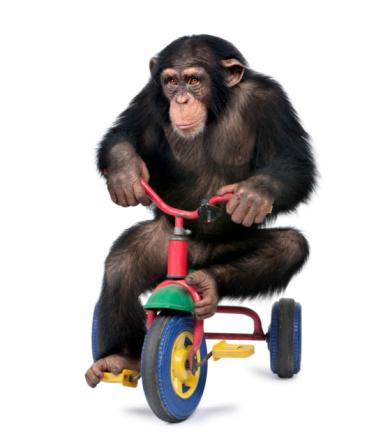 自転車「Young Chimpanzee playing on a bicycle」:スマホ壁紙(19)