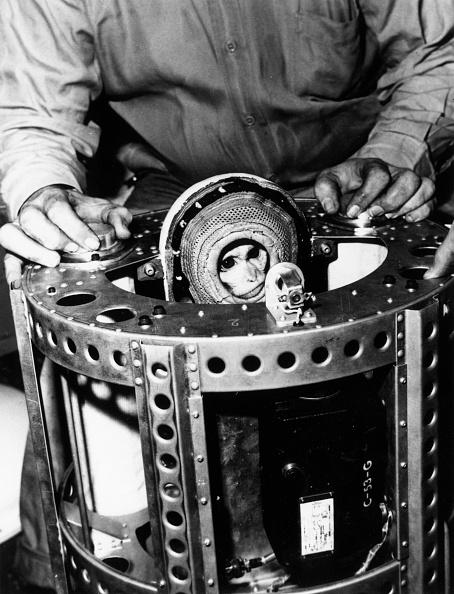 動物「Space Monkey」:写真・画像(12)[壁紙.com]