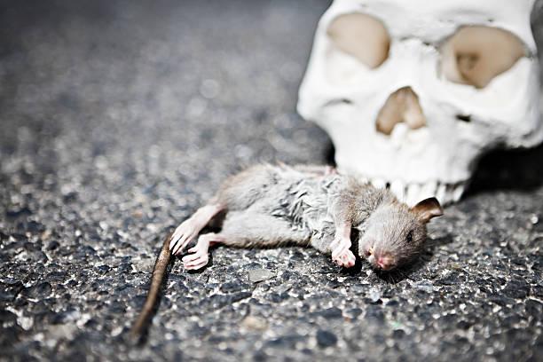 Dead rat with human skull:スマホ壁紙(壁紙.com)