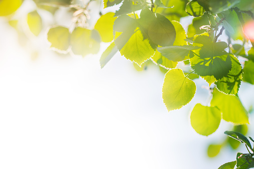 ������「Artistic photo of summer time leaves on a branch」:スマホ壁紙(18)