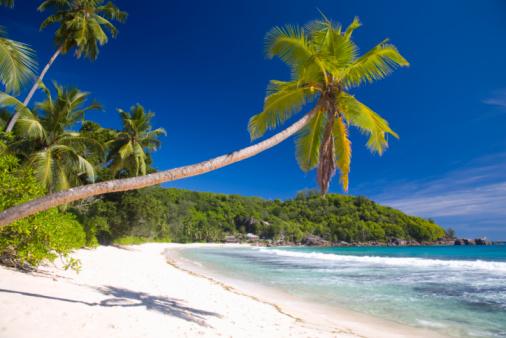 Island「Palm-fringed Anse Takamaka, Mahe, Seychelles」:スマホ壁紙(15)