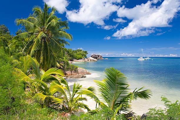 Palm-fringed Anse Bateau, Praslin, Seychelles:スマホ壁紙(壁紙.com)