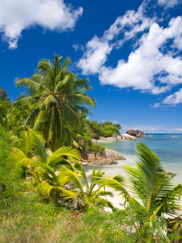 Frond「Palm-fringed Anse Bateau, Praslin, Seychelles」:スマホ壁紙(6)