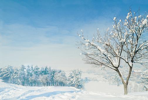吹雪「冬は、グリーンとホワイト」:スマホ壁紙(0)