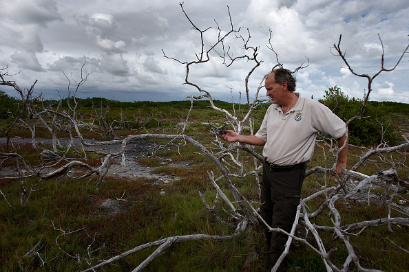 View Into Land「Climate Change Impacts South Florida Ecosystems」:写真・画像(2)[壁紙.com]