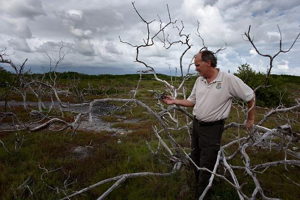 成長「Climate Change Impacts South Florida Ecosystems」:写真・画像(8)[壁紙.com]
