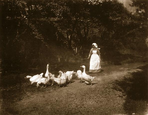 Tranquil Scene「The Farmer's Wife」:写真・画像(12)[壁紙.com]