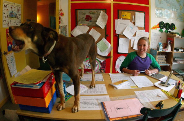 オーストラリア「A student is interrupted by her pet dog」:写真・画像(16)[壁紙.com]