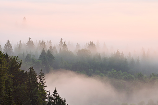 Fog「Morning mist in forest in Isar valley, elevated view, dawn (sunrise).」:スマホ壁紙(4)