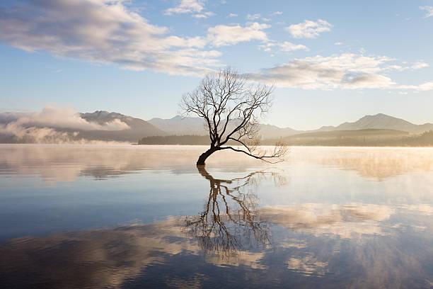 Morning mist on lake:スマホ壁紙(壁紙.com)