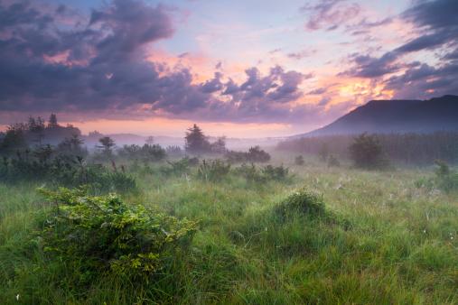 Fog「morning mist in a moor with dramatic sky, bavaria, germany」:スマホ壁紙(13)