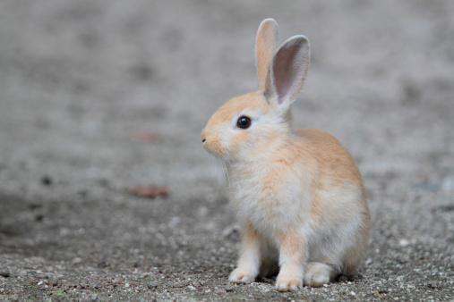 うさぎ「Young Rabbit」:スマホ壁紙(15)