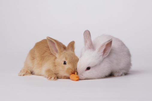 Eating「Young rabbits eating」:スマホ壁紙(12)
