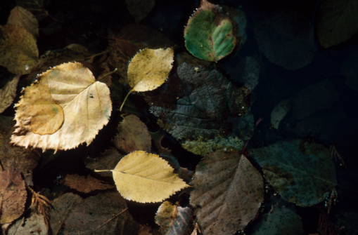 アダムズ川「Leaves floating in stream」:スマホ壁紙(11)