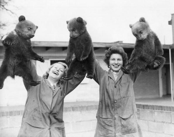 Brown Bear「Bear Handful」:写真・画像(16)[壁紙.com]