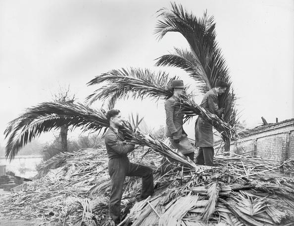 Frond「Palms On A Sunday」:写真・画像(8)[壁紙.com]