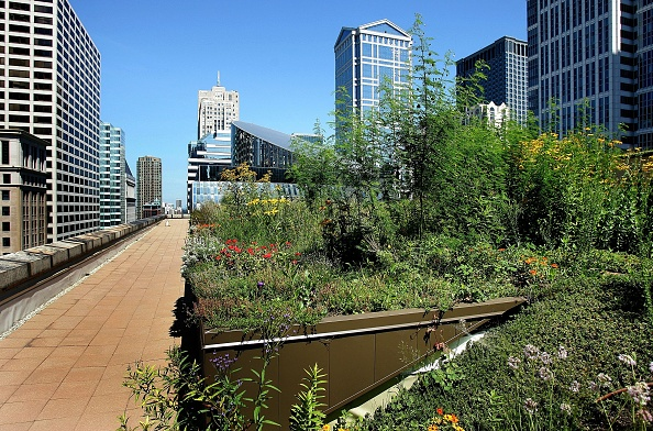 Rooftop「Green Rooftop Graces Chicago's City Hall」:写真・画像(9)[壁紙.com]