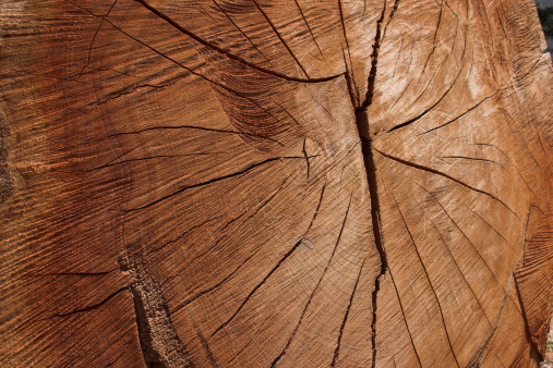 Deforestation「Long life - red wood」:スマホ壁紙(8)