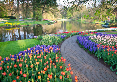 Garden Path「Sprigtime Keukenhof Gardens Tulips and Hyacinths」:スマホ壁紙(12)
