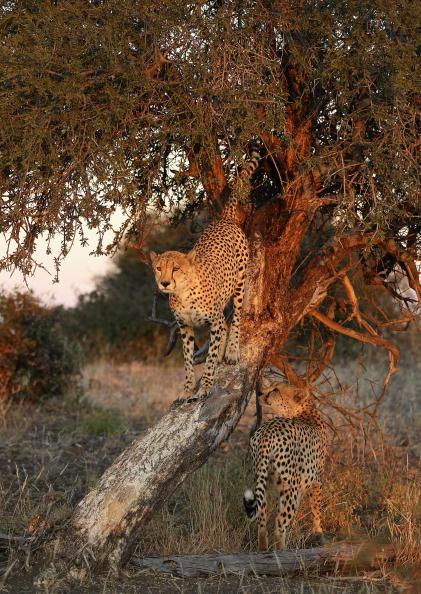 Botswana「An African Safari」:写真・画像(15)[壁紙.com]