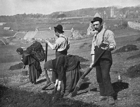 Basket「Planting Potatoes In Skye」:写真・画像(7)[壁紙.com]