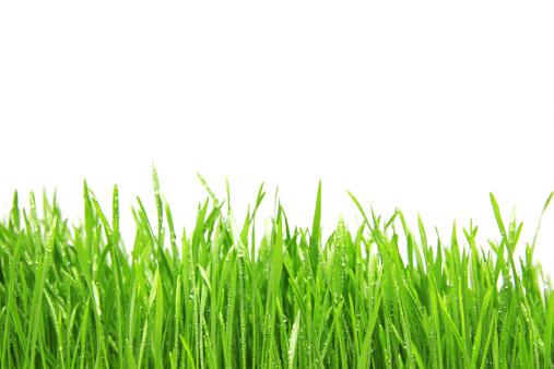 Buckwheat「Freshly watered grassy field」:スマホ壁紙(16)