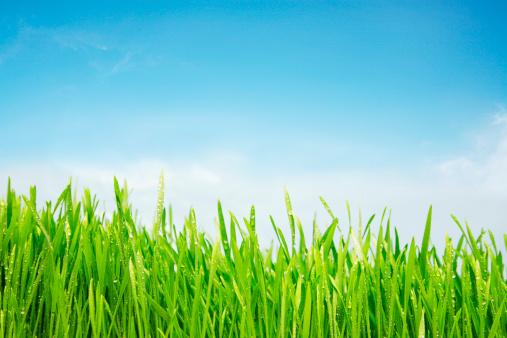 Wet「Freshly watered grassy field」:スマホ壁紙(8)