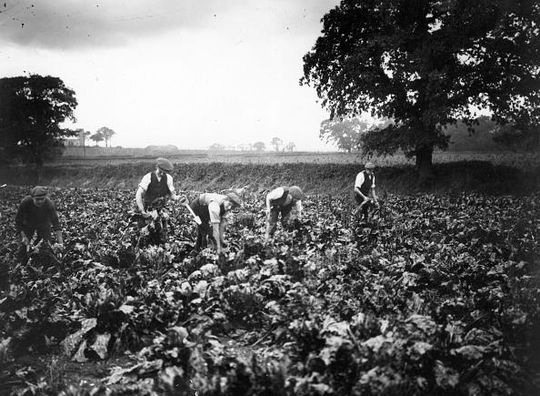 Rural Scene「Beet Workers」:写真・画像(18)[壁紙.com]