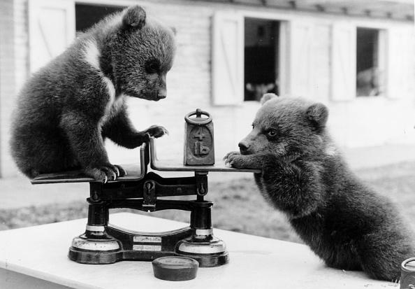 Scale「Bear Cubs」:写真・画像(0)[壁紙.com]