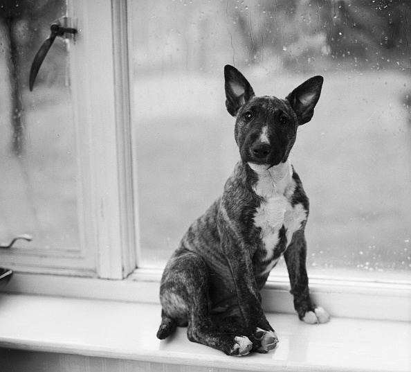 Chaloner Woods「Doggy In The Window」:写真・画像(1)[壁紙.com]