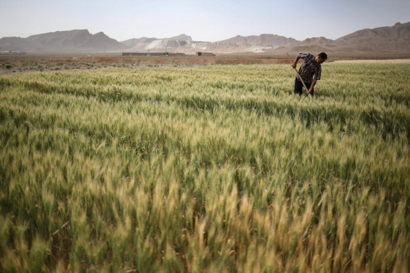 Wheat「A Trip Through The Heart Of Central Iran 25 Years After Khomeini's Death」:写真・画像(14)[壁紙.com]
