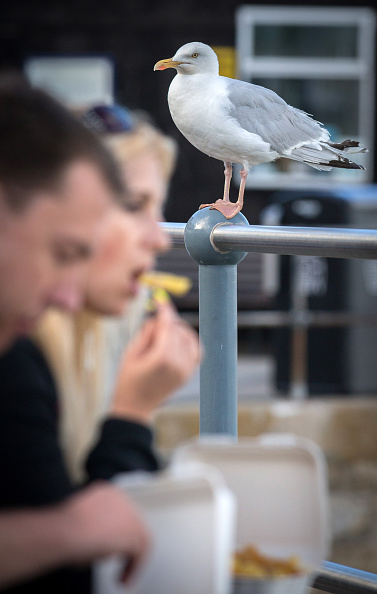 Water's Edge「Seagull Attacks Being Reported From Coastal Towns This Summer」:写真・画像(5)[壁紙.com]