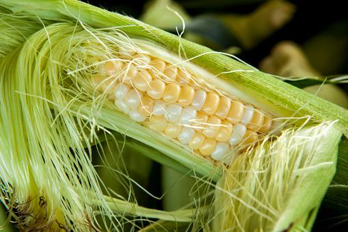 Silk「Ear of Fresh Corn」:スマホ壁紙(4)