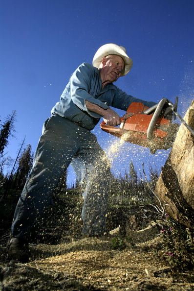 Sequoia National Forest「Bush Pushes To Undo Clinton Forest Preservation In Sierras」:写真・画像(7)[壁紙.com]