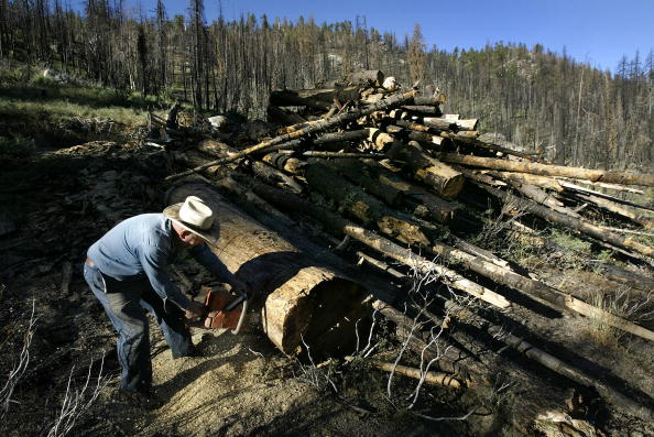 Lumber Industry「Bush Pushes To Undo Clinton Forest Preservation In Sierras」:写真・画像(2)[壁紙.com]