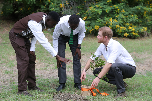 Queens Commonwealth Canopy「Prince Harry Visits The Caribbean - Day 3」:写真・画像(2)[壁紙.com]