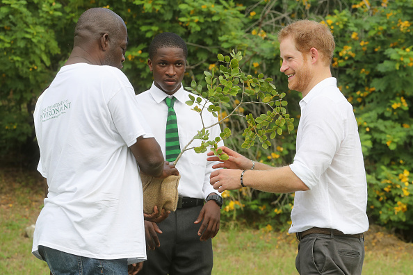 Queens Commonwealth Canopy「Prince Harry Visits The Caribbean - Day 3」:写真・画像(10)[壁紙.com]