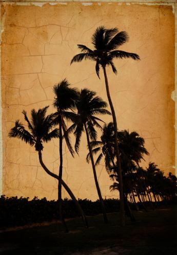 Sepia Toned「vintage palm trees」:スマホ壁紙(17)