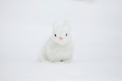 うさぎ「A small rabbit on the snow」:スマホ壁紙(18)