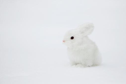うさぎ「A small rabbit on the snow」:スマホ壁紙(6)