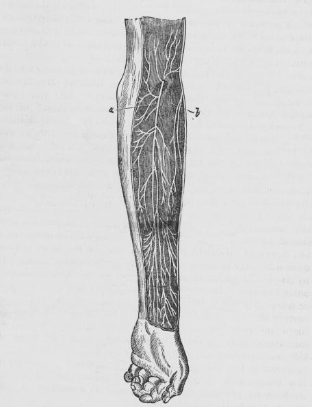 Biology「Nerves In The Human Arm」:写真・画像(17)[壁紙.com]